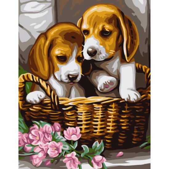 Beagle kiskutyák - számfestő készlet