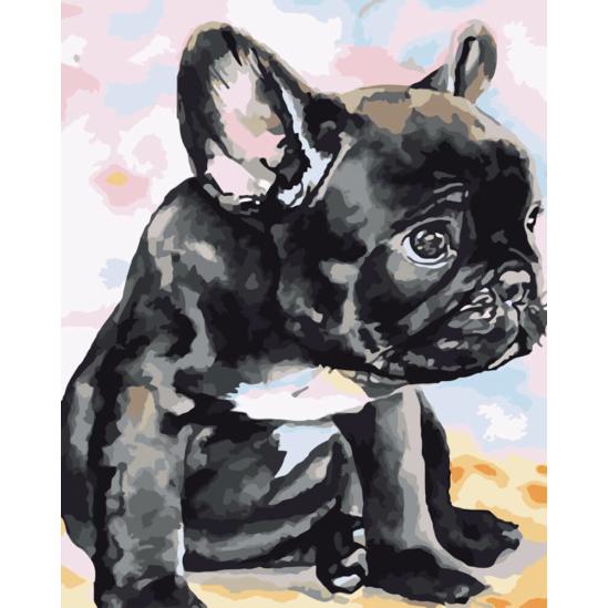 Francia bulldog - számfestő készlet
