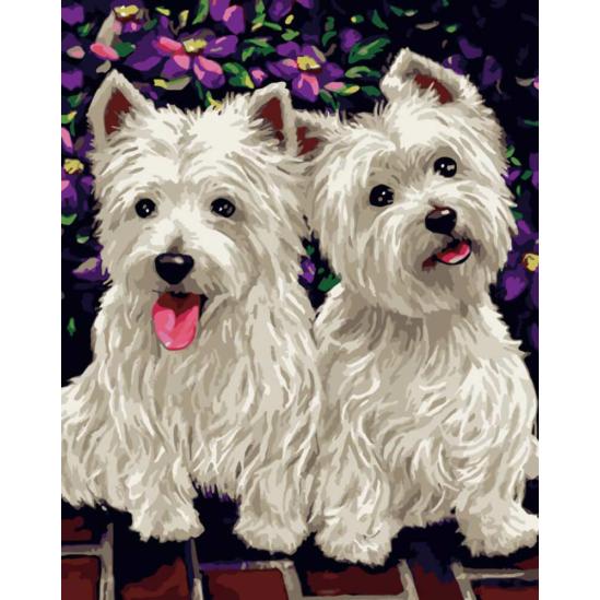 Westie kutyusok - számfestő készlet