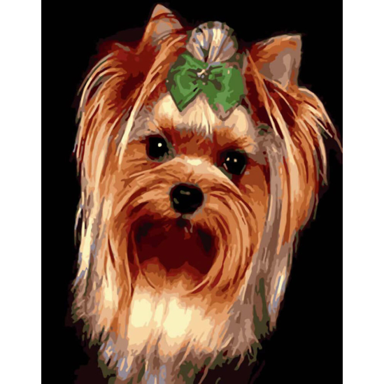 Yorkie kutyus - számfestő készlet