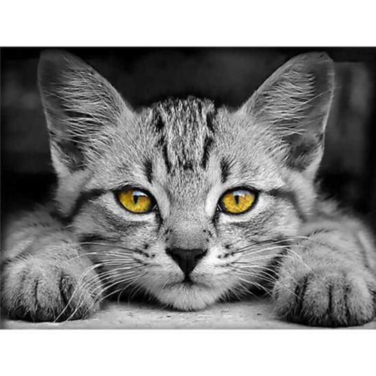 Kíváncsi macska - gyémántszemes kirakó