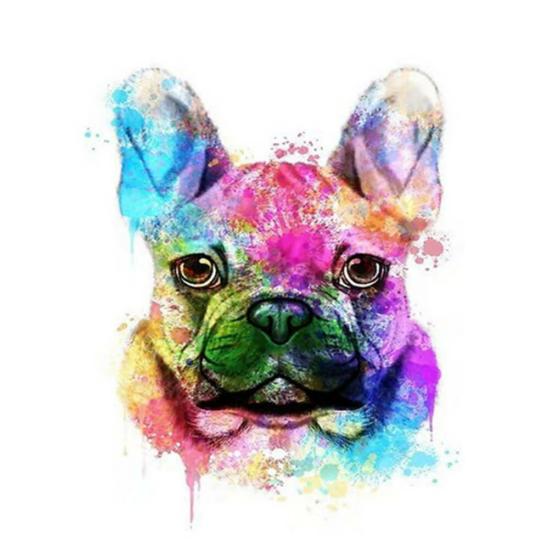 Színes bulldog - számfestő készlet