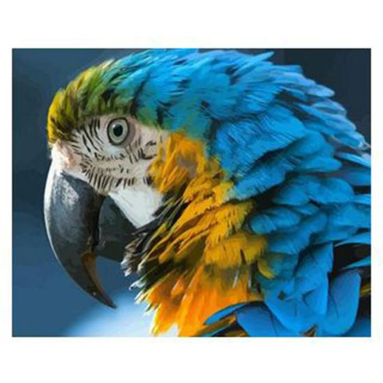 Papagájfej - számfestő készlet