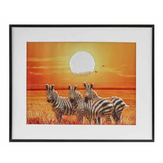 Zebrák a szavannán 40x50