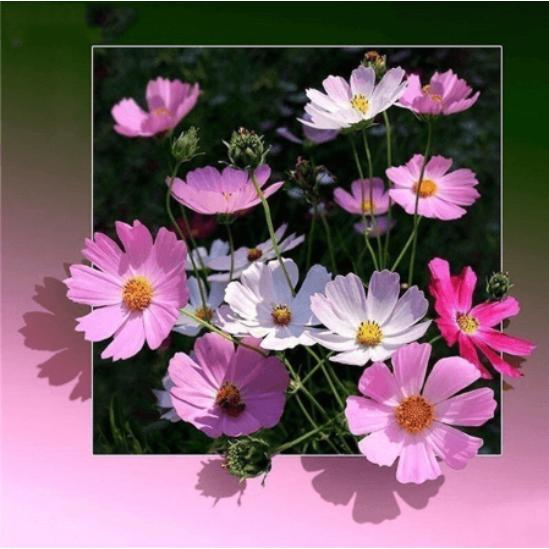 Virágcsokor 3D - gyémántszemes kirakó