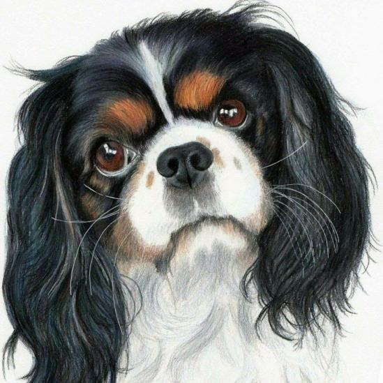 Spániel kutya - gyémántszemes kirakó