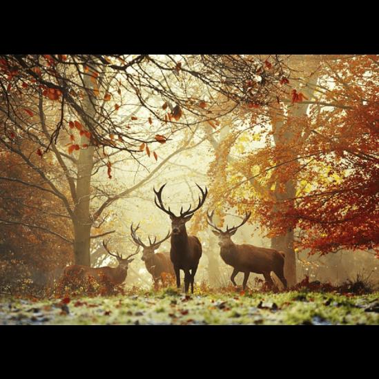 Szarvasok az őszi erdőben - gyémántszemes kirakó