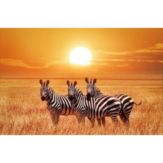 Zebrák a szavannán - gyémántszemes kirakó